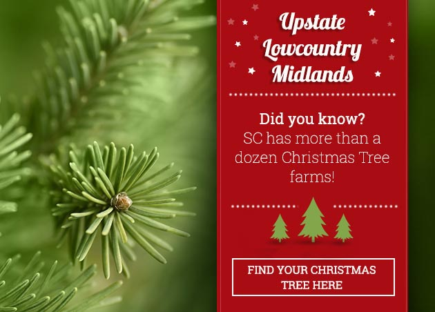 South Carolina Christmas Trees: Find SC Christmas Tree Farms | SCIWAY