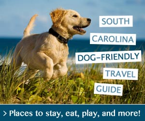 Dog Friendly Travel In South Carolina