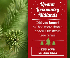 Christmas Tree Farms in South Carolina