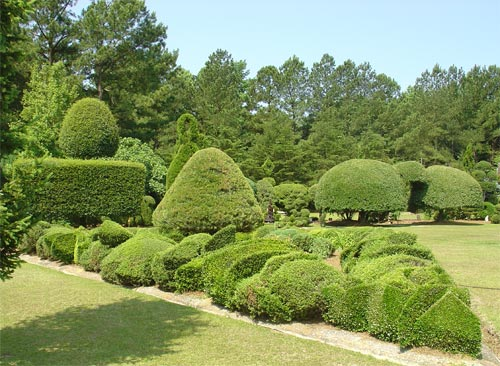 Pearl Fryar Topiary Garden Bishopville Lee County South Carolina