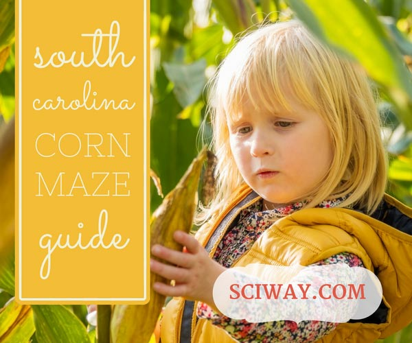South Carolina Corn Mazes